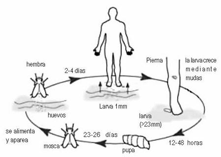 Como sacar a los parásitos del organismo en la casa